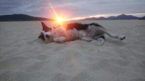 beach jim